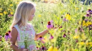 小さな女の子 野草 牧草地 子 幸福 小児期 子ども かわいい 花 夏 開花 幸せ 成功