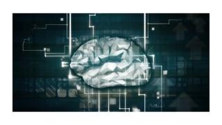 脳科学,Brain